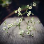 Baby's Breath by The-Exs-And-The-Ohs
