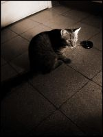 le chat IV by interferencia