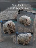 Stock Pack: Hund by Minaya86-stocks