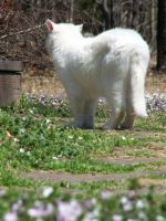 White Cat In Flowers11 by effing-stock