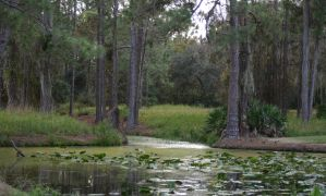 Florida Pond 02 by horsiexstock