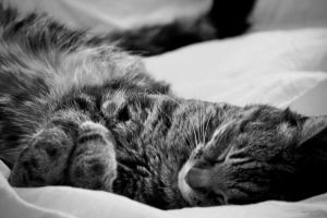 Flat Out by lisajlangrish