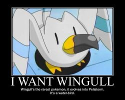 Wingull is actually good