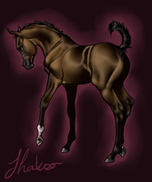 Shakoor - Foal Reference by Ehetere