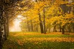 Misty Autumn... _13_ by my-shots