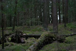 A Swedish Forest by Cathorse