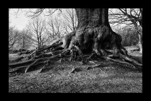 Tree and Roots II by neoweb