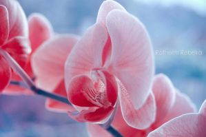 beautiful orchid by RothermRebeka