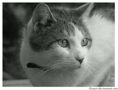 Cat with great eyes by LS0901