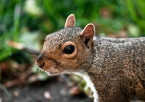 Toby the Squirrel by Raah-man