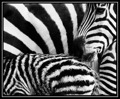 Stripes by Stilfoto
