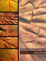 Dried and Pressed Leaves Pk by ALP-Stock