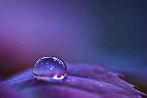 Purple rain by pqphotography