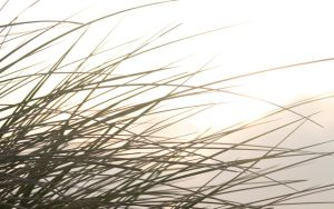 Shine Trough WallpaperGrass by Hoaxbe