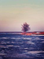 lonely tree by noxyzz