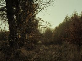 Autumn I by Topielica666