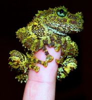 Mossy on my Finger by jeremyb504