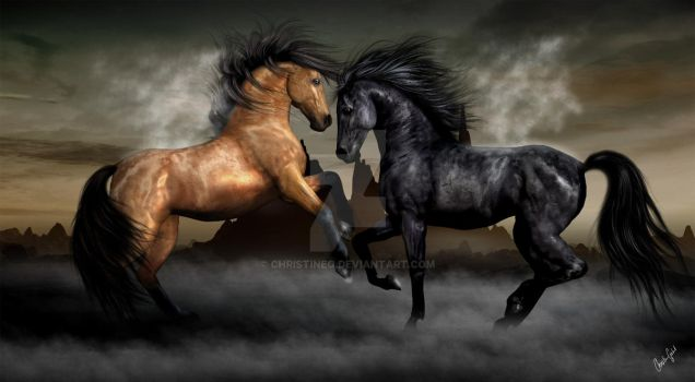 Dancing Stallions by ChristineG