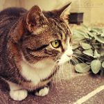 .:: A Purrfect Guest ::. by WishmasterAlchemist