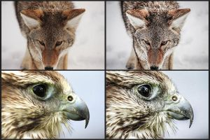 Free Wildlife Lightroom Preset 012 by nuugraphics