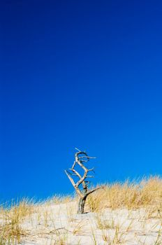Desert tree by czaknoris