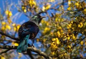 Tui by ARC-Photographic