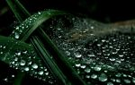 Raindrops on Webs by Shanen888