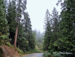 In The Middle Of The Stanislaus by mudhead1