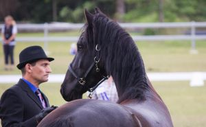 STOCK - Friesian Show 2012-107 by fillyrox