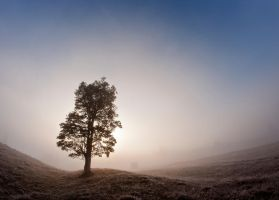 Sun in fog by lica20