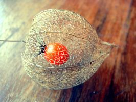 Cape Gooseberry by erzsebet-beast