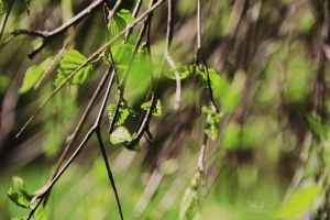 green by Blanchii