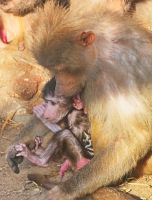 Maternal care by starykocur