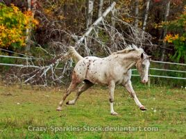 Lowering My Head Into Bucking Position by Crazy-Sparkles-Stock