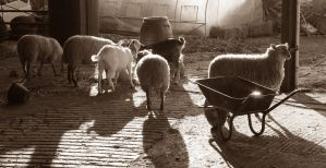 Sheep in the Sun 2 by Lotus-Pen