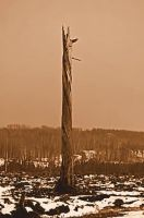 Last standing by cocobolo