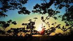 Sycamore Sunset by worldthroughglass
