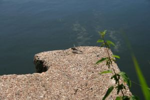 Dragonfly on the rock by AlmostInsane