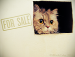 Just a Cat in a Box by iBlackCube