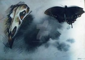 Raven skull painting with real butterfly by Uncharted-Mouse