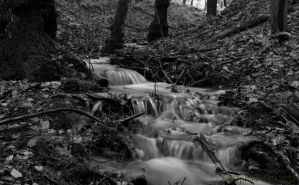 Stream and Forest III by friedapi
