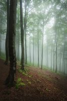 whispers of the forest VII by JoannaRzeznikowska