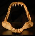 Shark jaw I by Grinmir-stock