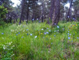 Wildflowers in Provence. France by jennystokes