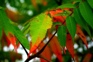 Fall Leaves by hm923