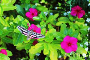 Hummingbird Moth by AMLensCreations