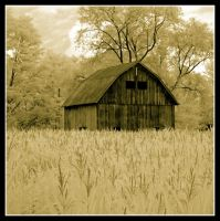 Barn in corn field, sepia, infrared by harrietsfriend
