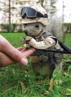 Military Squirrel by designbynilo