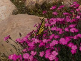 Butterfly and flowers by RLDStock