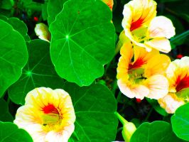 Lily Pad Green, Fire Yellow by SarahTaylorr